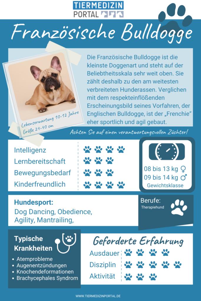 Alle wichtigen Infos zur Französischen Bulldogge