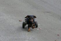 Alle wichtigen Infos zur Hunde-OP-Versicherung