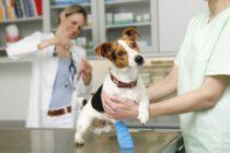 Verletzter Hund beim Tierarzt