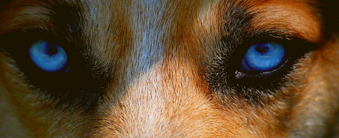 Hund herpes schnauze beim Wie man